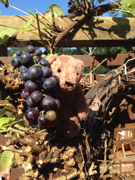 Bruno Hafer - 2 (1)